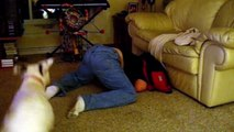 Jouer à cache-cache avec son chien, pas facile!