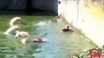 Woman Stuck In Dangerous Beers - Miscellaneous Videos