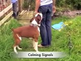 How To Use Calming Signals With Your Dog – Dog Training Tips