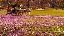 Jardin de France - Créatifs de l'érable