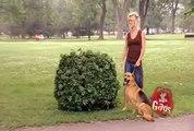 Hidden Camera Pranks & Gags - Ultimate Dog Joke