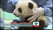امريكا : الإحتفال بمرور 100 يوم على ولادة صغير الباندا