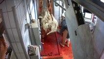 Nouveau cas de maltraitance animale dans un abattoir bio