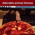 Compilation d'animaux voleurs - Chat, chien...