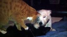 Moment détente pour ce chien qui se fait masser par un chien et un chat