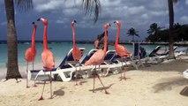 Des flamants roses viennent se détendre avec des touristes sur une plage