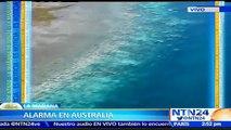 Barrera de coral en riesgo: arrecifes en Australia pierden su color debido a los niveles de dióxido de carbono