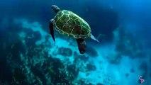 فيديو نادر هذا هو الحيوان الذي يخلصنا من قنديل البحر فيديو روعة