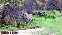 When Crazy Animals Attack Big Birds Attack - Best Animal Attacks vs Leopard, Lion, Hyena #6