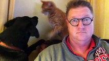 Un dimanche matin avec son chat et son chien
