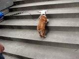 Muntz bunny hopping up stairs