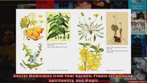 Download  Secret Medicines from Your Garden Plants for Healing Spirituality and Magic  Full EBook Free