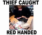 Thief caught red handed Funnyclips 2016
