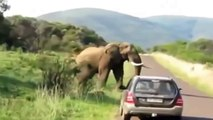 Animals Attack - elephant attack - Lion vs Hyena - Real Fight And Unexpected Results