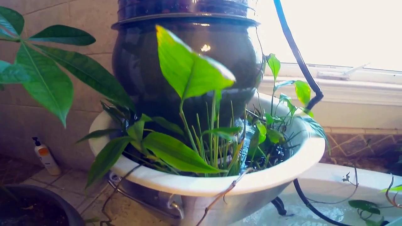 Upside Down Aquarium in Garden Tub