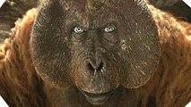 Vidéo 360° - Mowgli dans le temple des singes- LE LIVRE DE LA JUNGLE