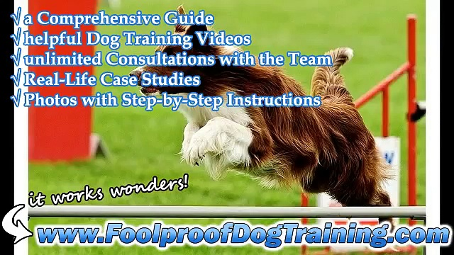 Dog Obedience Training In Nh – BEST Dog Training
