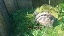 DANK Tortoise and the DANK Cat