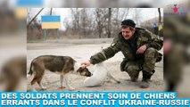 Des soldats prennent soin de chiens errants dans le conflit Ukraine-Russie ! Plus d'infos dans la minute chien #195