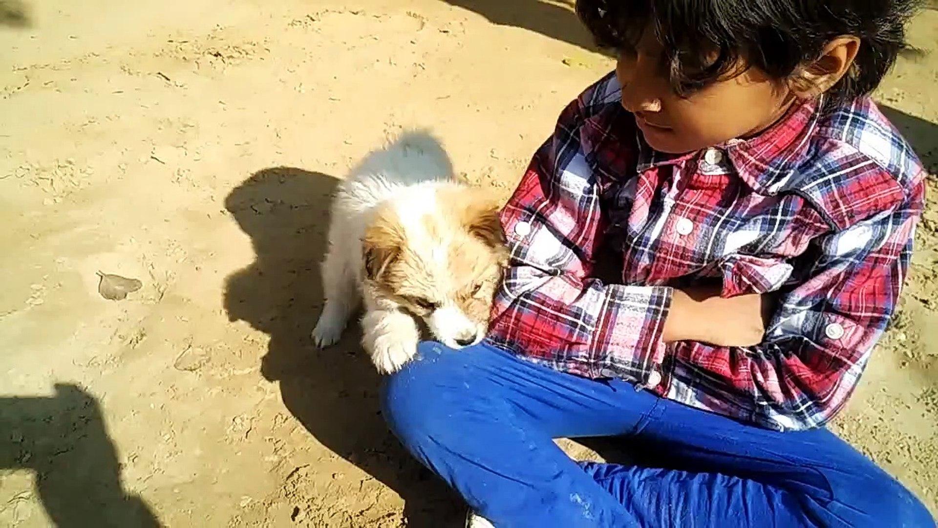 My Cute Puppy is my Best Friend - Cute Baby Video - Cute Puppy Video