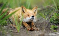 10 Wild Animals That Are Becoming Domesticated Pets