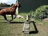Ronni Jumping Free 80cm