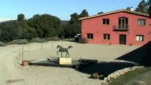 Walkyria El Jamaal Equus Arabians