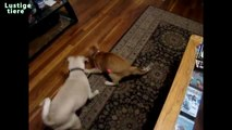 Funny cats Try Laser Light to Catch cats vs Laser Pointer [New HD Video]
