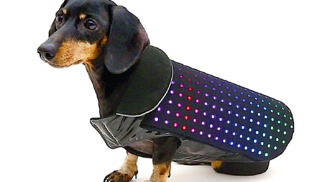 What's Trending: 3 Cool New Gadgets for Dogs
