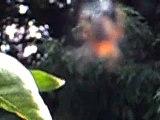 Herfst/Autumn in Holland 2010-6: Wonder van het spinneweb/Miracle of the cobweb September 25