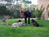 beaba-canin-education-a-domicile-chien-berger_picard