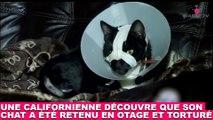 Une californienne découvre que son chat a été retenu en otage et torturé... Plus d'infos dans la minute chat #181