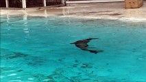otaries zoo de la fleche