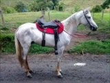 Cavalo Branco Marcha Picada Gravatá Meus Amores