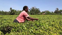 How NetSuite is Supporting Kiva to Scale Globally Across 80 Countries | NetSuite Inc.