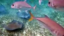 shark grab in Hol Chan Belize