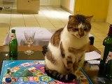 Mr abrutis joue au Trivial