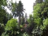 Hidden House in Redwoods Ben Lomond California Jack D Deal Videos
