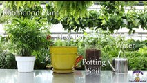 How To Repot A House Plant with Nicks Garden Center