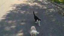 Un toutou aveugle fait sa promenade dans la rue, mais regardez la réaction du chat