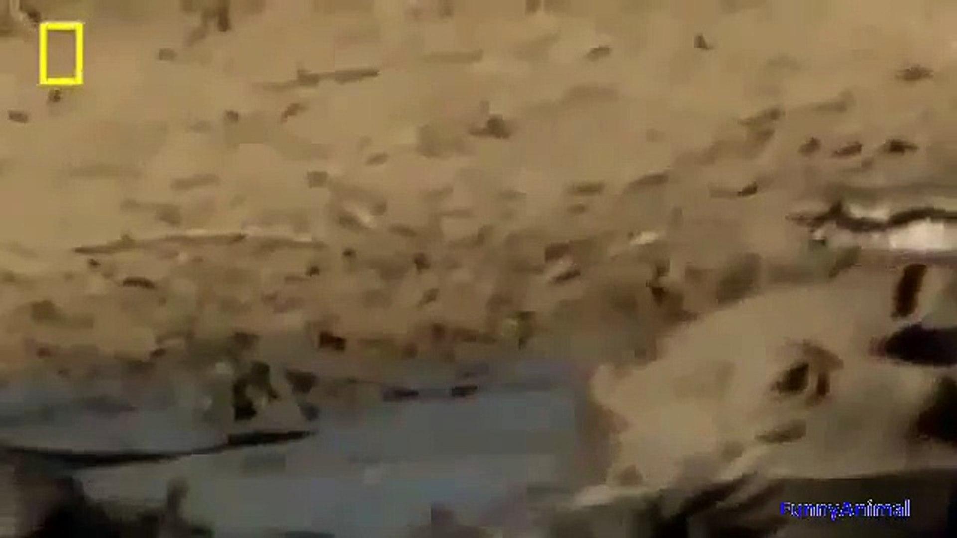 National Geographic Documentary Wild Animals attack National Geographic Animals ✔ ► P.3