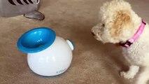 Ifetch dog Toy Puppy Ball