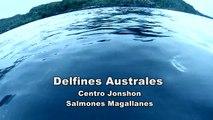 Delfines Australes