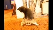 Best Funny Cats Fails Compilation - Funny Cat Videos 2015 - Funny Pets, Funny Animals