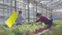 Fermes DEPHY : Témoignage d'un horticulteur  innovant