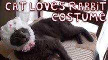 This Cat Just Loves Her Rabbit Costume!