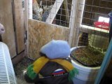 En Russie, un petit singe se fait passer pour un enfant