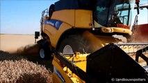 New Holland CX 8090 en 880 - Agri Huart & Lateur graan dorsen 2014 - Moisson 2014