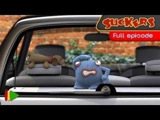 Suckers - 37 - Fleas