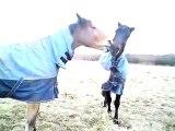 Funny Horses arguing over ball (fishing pellet, buoy). Horse tug of war.
